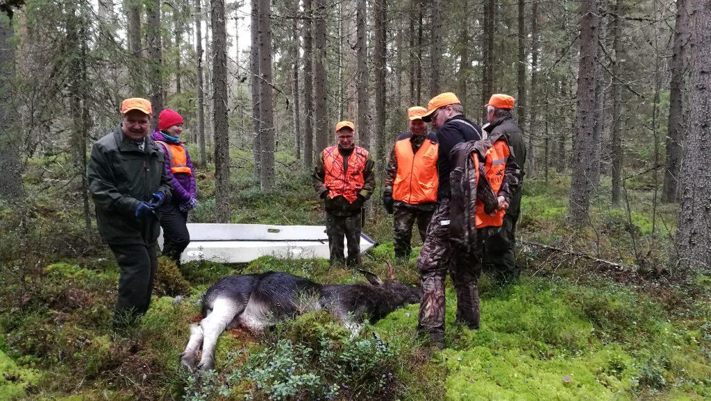 Miehet metsällä, saaliina hirvi